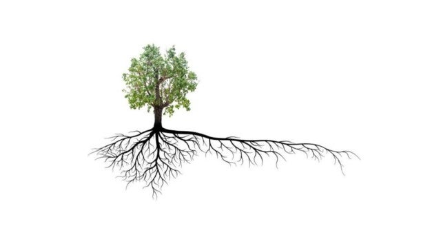 An illustration of a tree with a complete root system